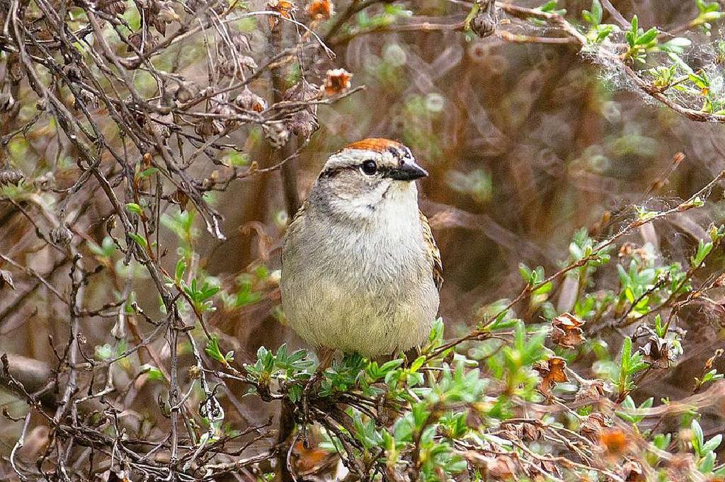 ideas de paisajismo de bajo mantenimiento en el patio trasero Arbustos Para Pjaros Paisajismo Amigable Con Las Aves
