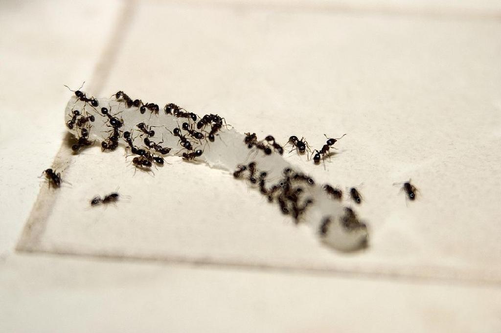 كيفية التخلص من نتن رائحة البيت النمل